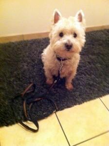 Rufus vor der Behandlung