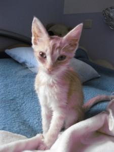 Sunny als Katzenkind