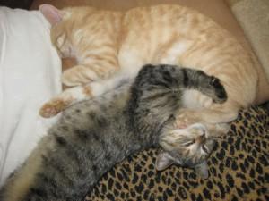 Sunny und Lilly