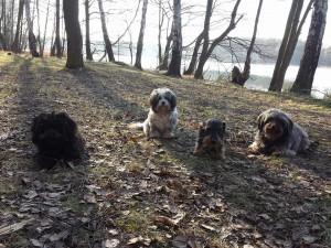 Raja, Issa und Nele mit ihrem Dackelfreund Rudi