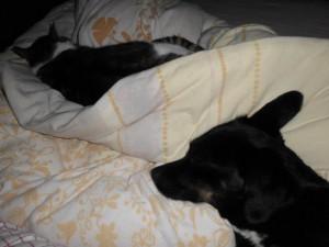 Mara und Maya auf dem Bett